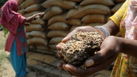 65 lakh tonnes grain go to waste in four months, even as the poor went hungry  - K N Ramachandran