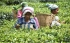 SORDID TALE OF TEA ESTATE WORKERS IN UDALGURI, ASSAM